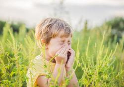 Les allergies sont de retour